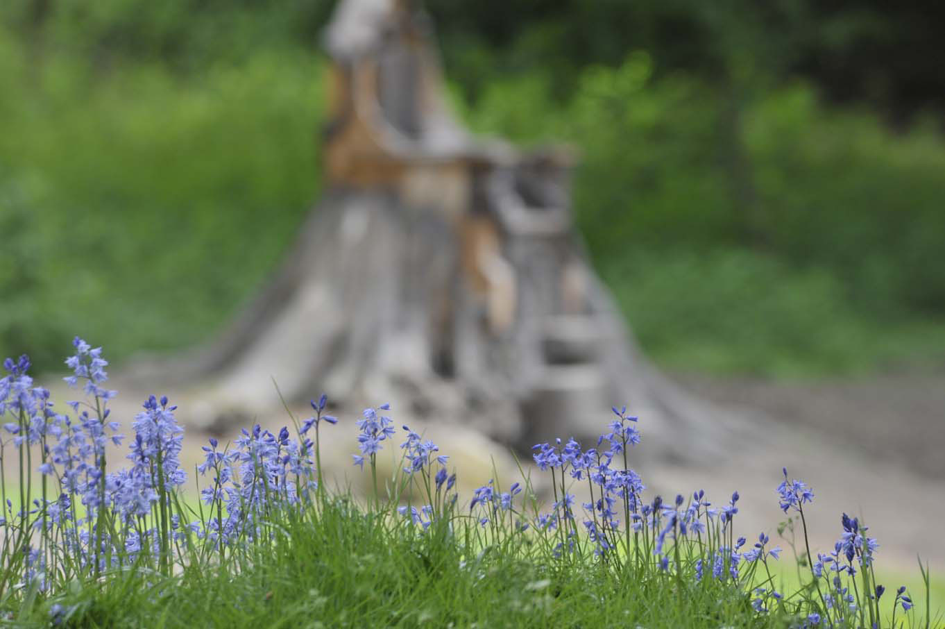 The Throne in Fletcher Park, with bluebells in the foreground.